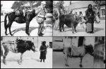 Stanovnici Podgorice, XX vijek